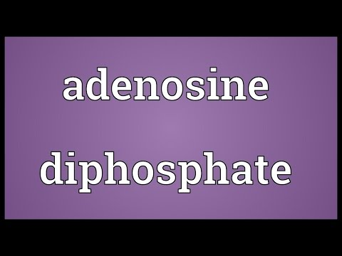 Header of adenosine diphosphate