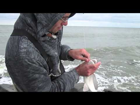 Surf Fishing for Redfish in Delaware