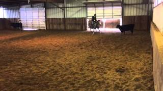 Katness- Jared Lesh Cowhorses
