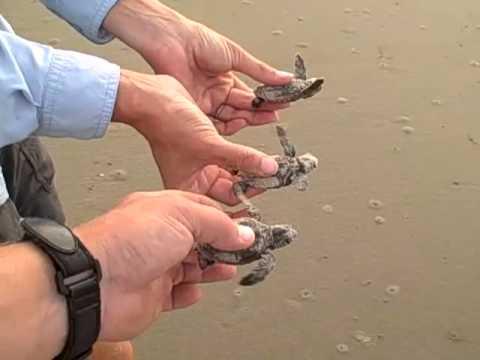 Flying Turtles