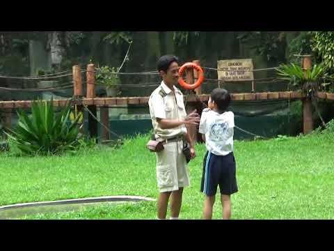 Atraksi pertunjukkan burung elang dan rangkong Bird of Preys di Taman Safari Bogor