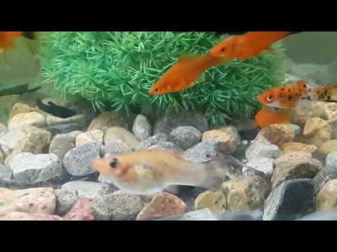 My aquarium.  Azerbaijan, Baku