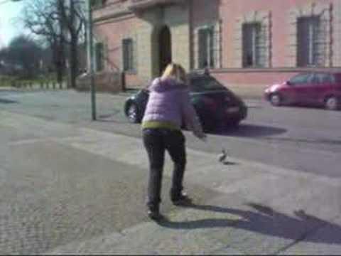 caccia al piccione