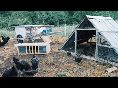 5 Chicken Coops That Work - 5 Brilliant Ways