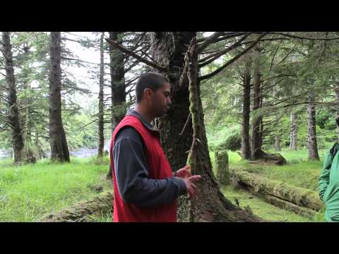 Tour led by Watchman - SGang Gwaay Llnagaay (Ninstints) - Haida Gwaii