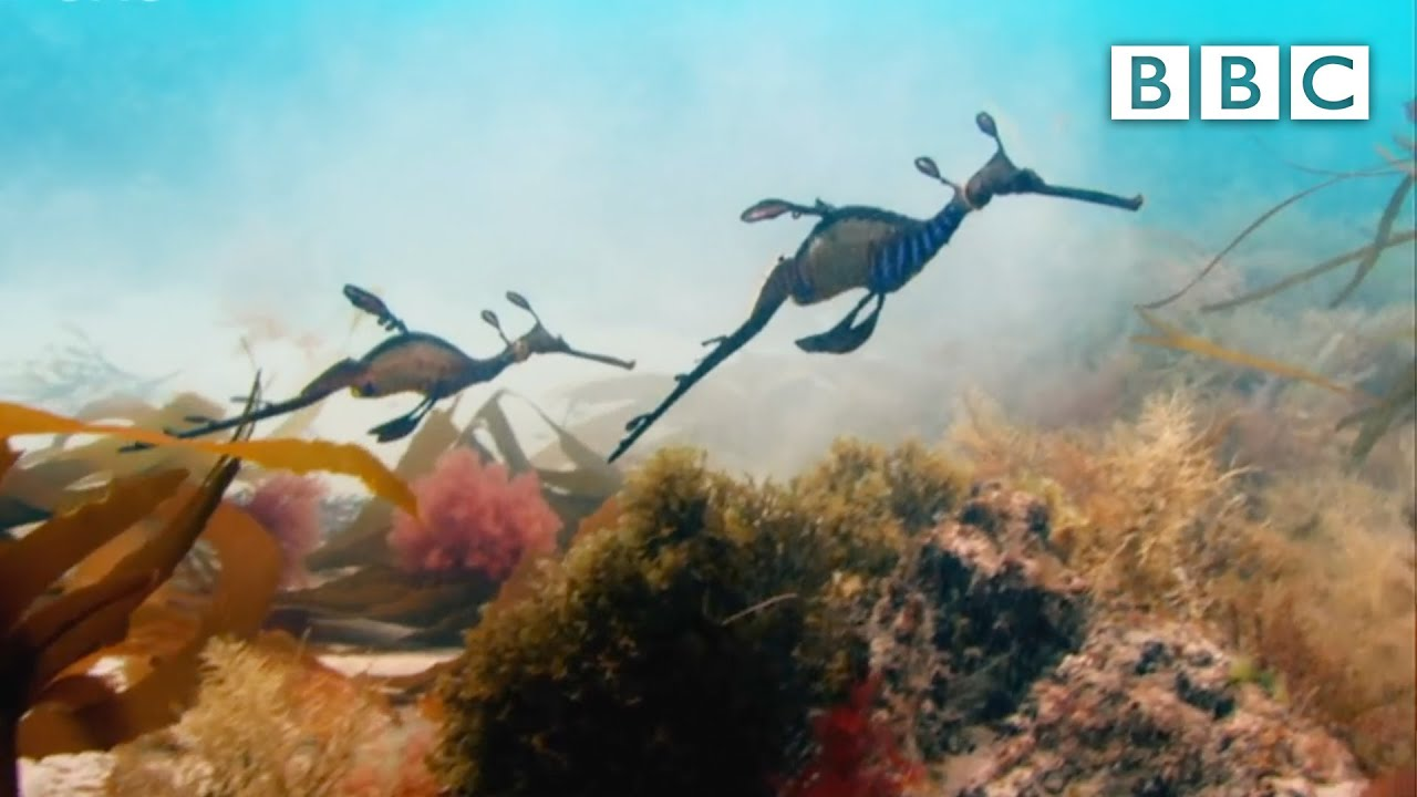 What A Wonderful World With David Attenborough - BBC One