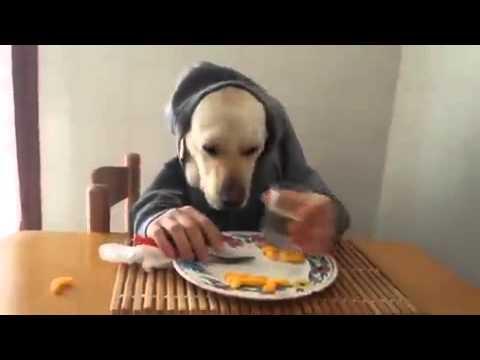 Hund isst wie ein Mensch