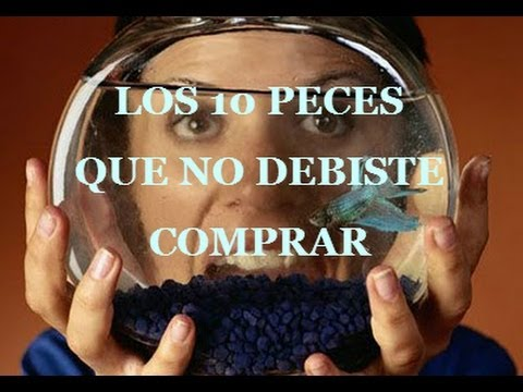 Los 10 peces que nunca debiste comprar / 10 fish you should never buy
