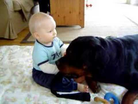 Gibson is gone 1/7-08,RIP, Rottweiler&baby the real side of Rottweilers friendlines Video