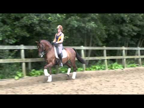Sporthorse/ Dressage horse for sale: WesTrade's Winston