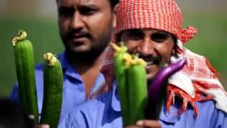 BTV新闻报道:沙漠中的中国蔬菜大棚