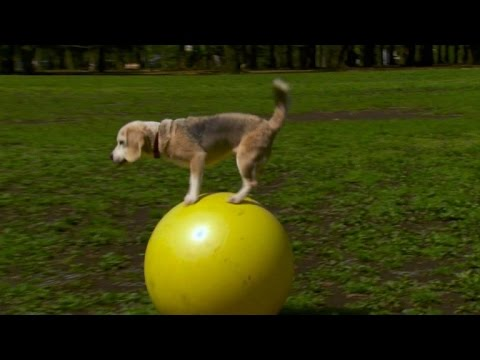 Japan pooch sets yoga ball speed record
