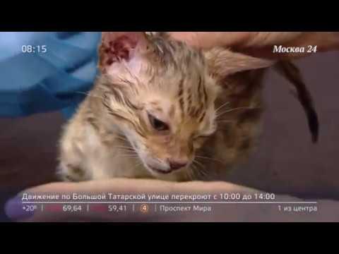 Жестокое обращение с беззащитным котенком