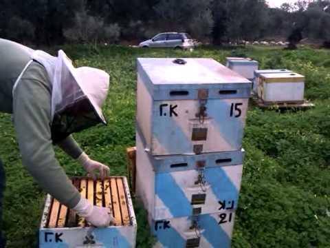 Επιθεώρηση δυόροφου μελισσιού 20-02-2012 Music Videos