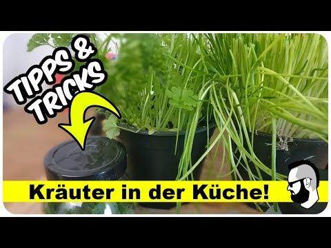 Kräuter Pflanzen auf der Fensterbank (Tipps & Tricks)