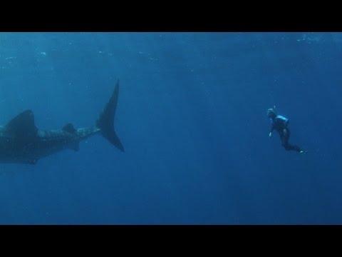 Ningaloo Reef Whale Sharks, Exmouth, Western Australia