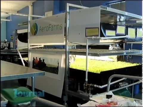 EcoVeggies Urban Farming at St. Philips Academy