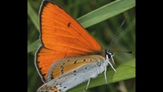 Rozmanitost života a zdraví ekosystémů