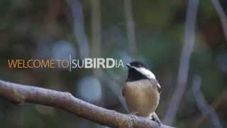 Make Your Yard More Bird Friendly