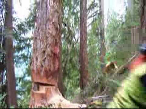 West Coast Heli Logging