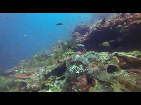 Diving Komodo Island Indonesia Winter 2014
