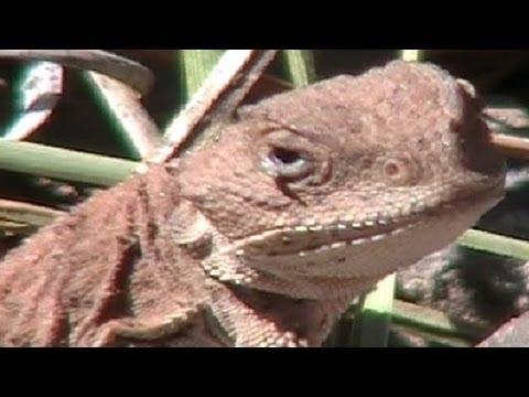 The Nature Explorers South Mogollon Rim Arizona Part 8 of 11 Animals Landscapes Ecosystem Example