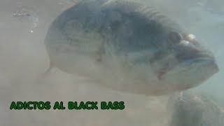 Adictos al Black Bass: PESCA DEL BLACK BASS EN JUNIO