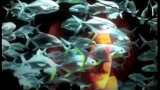 Watch Son Ambulance Horizons video