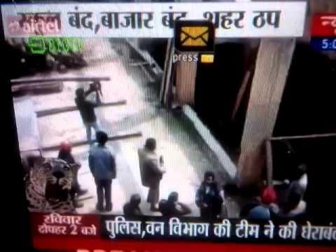 Leopard in Meerut news 24 reporter he climb 16 fee