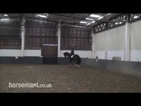 Horsemart:How to ride an accurate circle for dressage