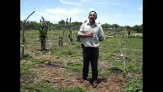 Sistema de Riego Solar Cultivo de Loroco El Salvador