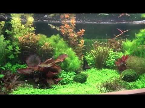 aquariumplanten soorten