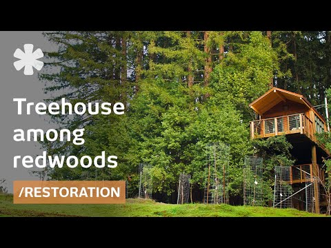 Airline exec builds observation tower treehouse as tiny home