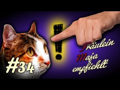 Katzenerziehung, How to - Nicht alles durchgehen lassen! #034