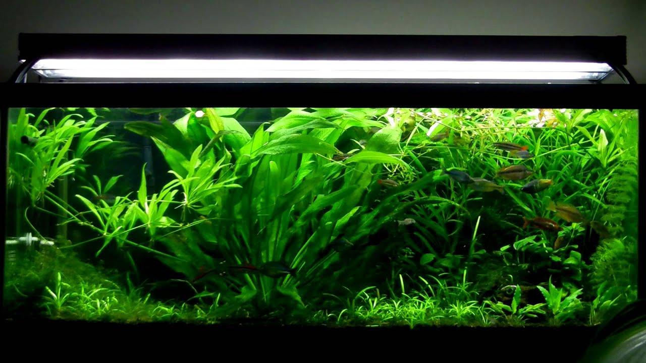 Planted Aquarium October 2012 YouTube