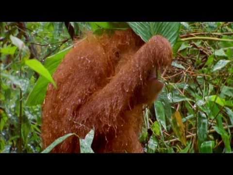 WNF voor het regenwoud (Eneco)