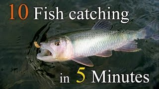 10 Fish catching  in 5 minutes ( 5분내에 10마리낚기)