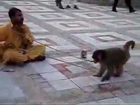 Funny Monkey video