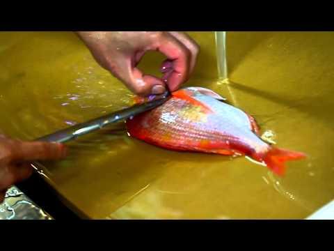 Sanmai Oroshi Tai (Red Snapper)- Japanese Knife Imports