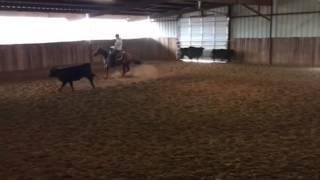 Sahara- Jared Lesh Cowhorses