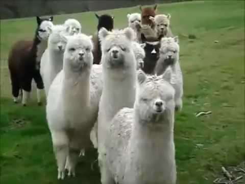 Top 10 Funny Animals 2012-2013