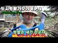 녹색연합 성북동 사무실 텃밭가꾸기 EP1