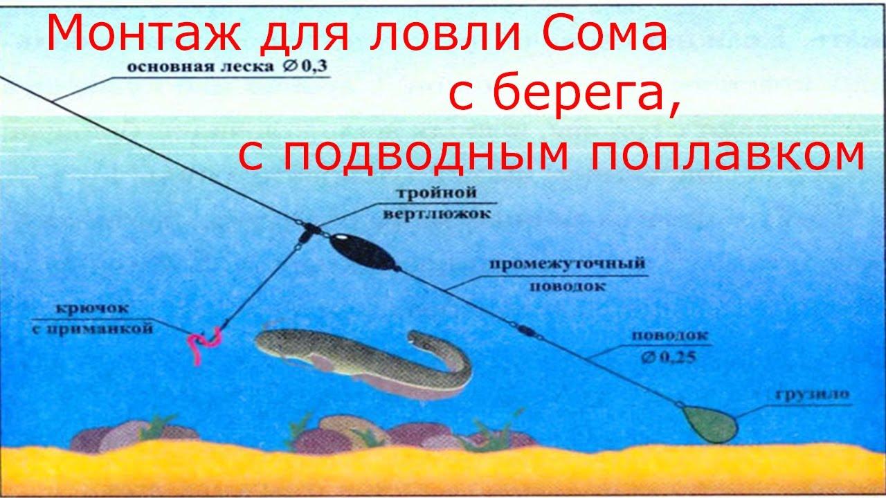 Как сделать рыбалка для сома