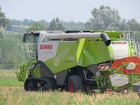 Summer wheat harvest/nyár búza aratás/ 2019 *INTRO* Claas Lexion Terra Trac. 600.750