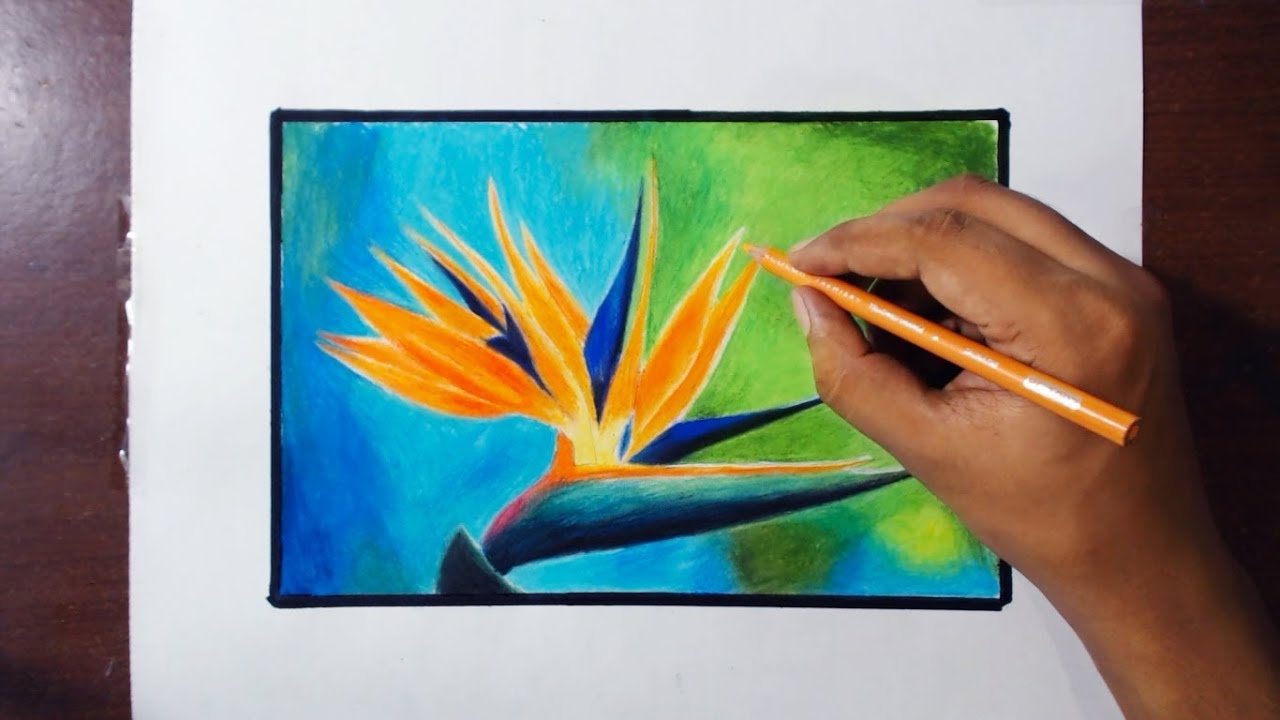 Birds Flowers Drawing Drawing Paradise Bird Flower