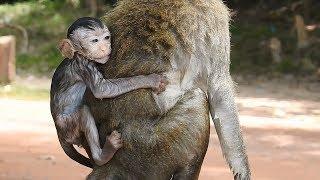 So Pity Baby, Amara Drown Inside Water By Stupid Monkey, No One Help Amara Daily Monkeys Man #716