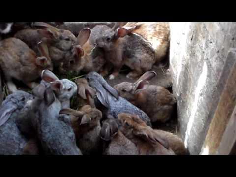 Ямное содержание кроликов,решение перенаселения ямы.