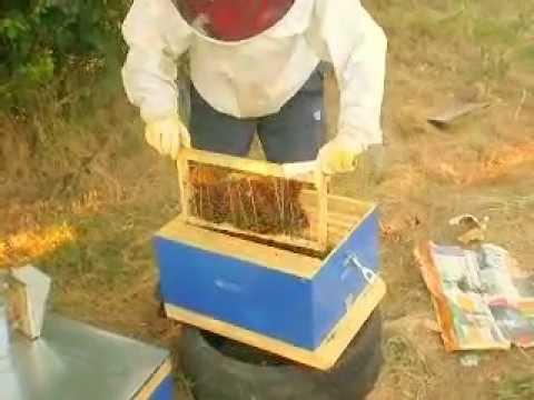 Συνένωση μελισσιού με εφημερίδα. Music Videos