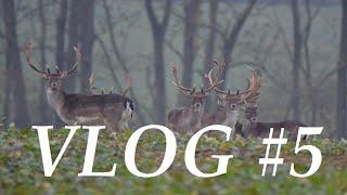 Jagd Dreispross VLOG#5