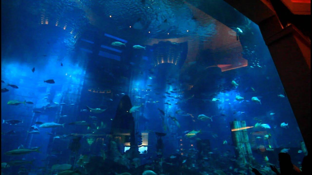 Worlds Largest Indoor Aquarium